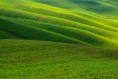 Grüne Hügel Stockbilder