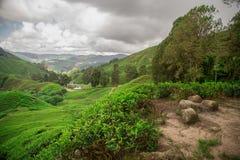 Grüne Hügel auf Teeplantage mit Bergen im Hintergrund unter szenischen Himmeln Stockfotos
