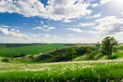 Grüne Hügel mit Bäumen und Gras unter den überschreitenen Wolken Stockbild