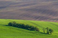 Grüne Hügel mit jungem Weizen Lizenzfreies Stockbild