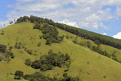 Grüne Hügel mit Kiefern lizenzfreies stockbild