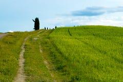 Grüne Hügel mit Zypressen und grüne Wiesen Landschaft Val d ?Orcia im Fr?hjahr Zypressen, H?gel und gr?ne Wiesen stockfoto