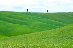 Grüne Hügel mit Zypressen und grüne Wiesen in Val d 'Orcia, Toskana, Italien stockfotos