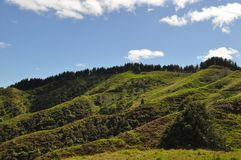 Grüne Hügel in Neuseeland lizenzfreies stockbild