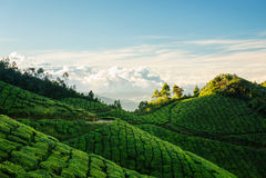 Grüne Hügel von Kolukkumalai-Teeplantagen in Munnar Lizenzfreies Stockbild