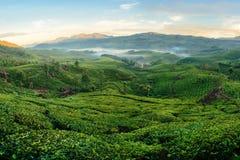 Grüne Hügel von Teeplantagen in Munnar Lizenzfreies Stockfoto