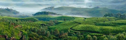 Grüne Hügel von Teeplantagen in Munnar Stockfotografie