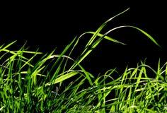 Grüne Harmonie Stockbild