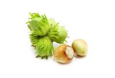 Grüne Haselnüße Stockbild