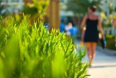 Grüne Hecke stockbilder