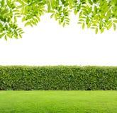 Grüne Hecke lizenzfreies stockbild