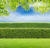 Grüne Hecke lizenzfreie stockfotografie