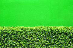 Grüne Hecke lizenzfreie stockfotos