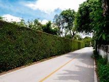Grüne Hecke Konzeptbild von ืnatürliche Wand auf Landstraße stockfotos