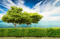 Grüne Hecke mit Baum stockbilder