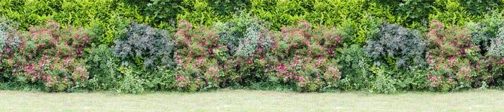 Grüne Hecke mit dem Blühen bepflanzt nahtloses endloses Muster mit Büschen lizenzfreie stockfotografie