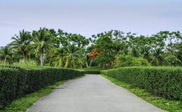 Grüne Hecke mit Wegweise im Garten stockfoto