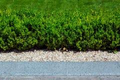 Grüne Hecke von laubwechselnden immergrünen Büschen stockbild