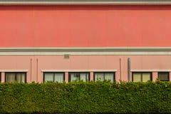 Grüne Heckenzaunwand vor dem Bürogebäude Grünes Le Lizenzfreie Stockfotos