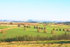 Grüne Herbstlandwirtschaftslandschaft mit Bäumen Stockfotos