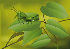 Grüne Heuschrecke lizenzfreie abbildung