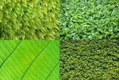 Grüne Hintergrundsammlung Lizenzfreie Stockfotografie