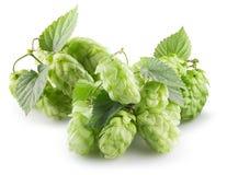 Grüne Hopfen lokalisiert auf einem weißen Hintergrund lizenzfreies stockfoto