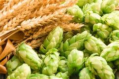 Grüne Hopfen, Malz, Ohren der Gerste und Weizenkorn lizenzfreie stockfotos