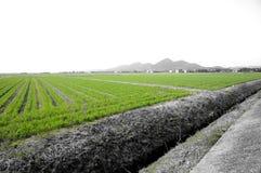 Grüne japanische Ansicht Stockfoto