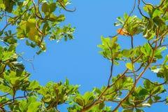 grüne Jungeblätter auf blauem Himmel Stockfotografie