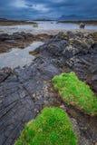 Grüne Küstenlinie und schwarze Steine bei Ebbe, Schottland Stockbild