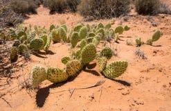 Grüne Kakteen und Wüstenlandschaft von Utah, USA lizenzfreies stockbild