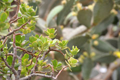 Grüne Kaktuspflanzenahaufnahme Stockfotografie