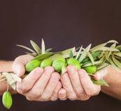 Grüne Kalamata-Oliven in der Hand auf braunem Hintergrund Lizenzfreie Stockbilder