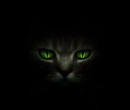 Grüne Katzenaugen, die in die Dunkelheit glühen Stockfotografie