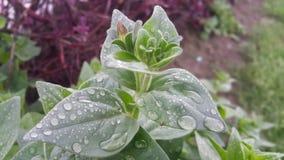 Grüne kleine Blumen Stockbild