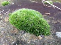 grüne kleine Insel, Stockbild