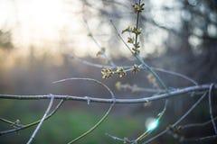 Grüne Knospe auf einem Baumast im oark lizenzfreie stockfotografie