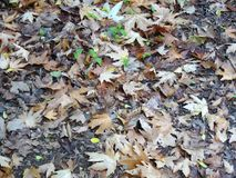 Grüne Knospen im Herbstlaub stockbild