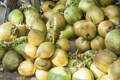 Grüne Kokosnüsse Stockfotos