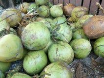 Grüne Kokosnüsse auf dem Speicher stockbilder