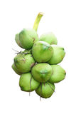 Grüne Kokosnuss Stockfotografie