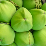 Grüne Kokosnuss am Baum Lizenzfreie Stockfotografie