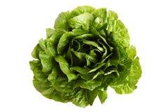 Grüne Kopfsalatsommerendivie lizenzfreie stockfotos
