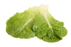 Grüne Kopfsalatsommerendivie stockfotografie