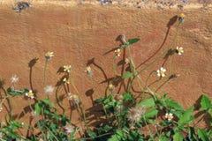 Grüne Kriechpflanze Stockfoto
