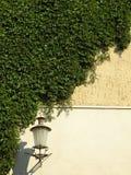 Grüne Kriechpflanze und Lampe stockbilder