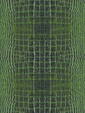 Grüne Krokodilhaut Stockfoto