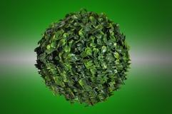 Grüne Kugel vom kleinen Blatt Stockfotos