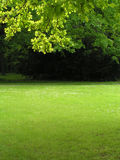 Grüne Landschaft 2 Stockbilder